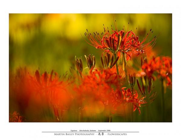 A Flor do Equinócio - Foto 2