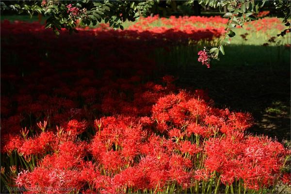 A Flor do Equinócio - Foto 3
