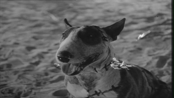 Frankenweenie - 1984 - screenshot 2
