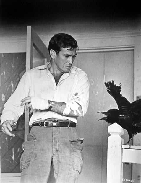 Rod Taylor - The Birds - Photo 1